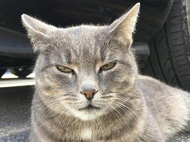 cat-2800399_960_720