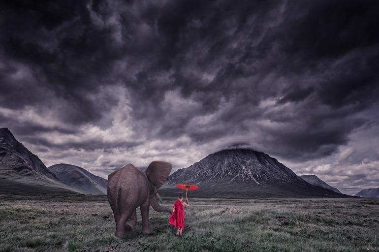elephant-1873439_960_720
