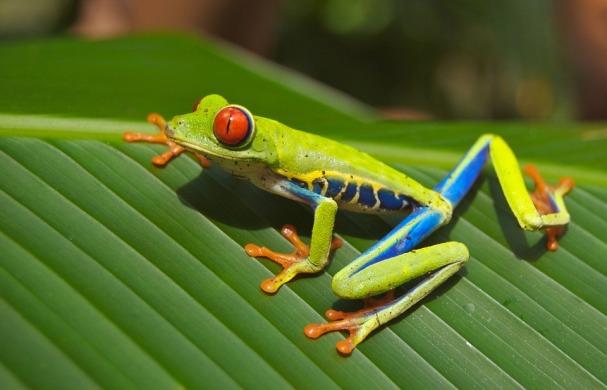 tree-frog-69813_960_720