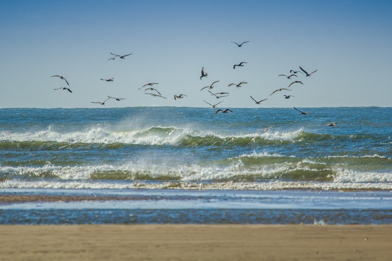 gulls-1937919_1920