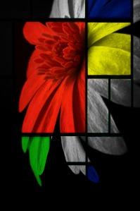 flower-184849_1920